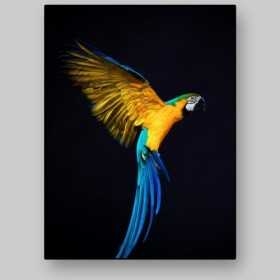 Portrait of a flying parrot
