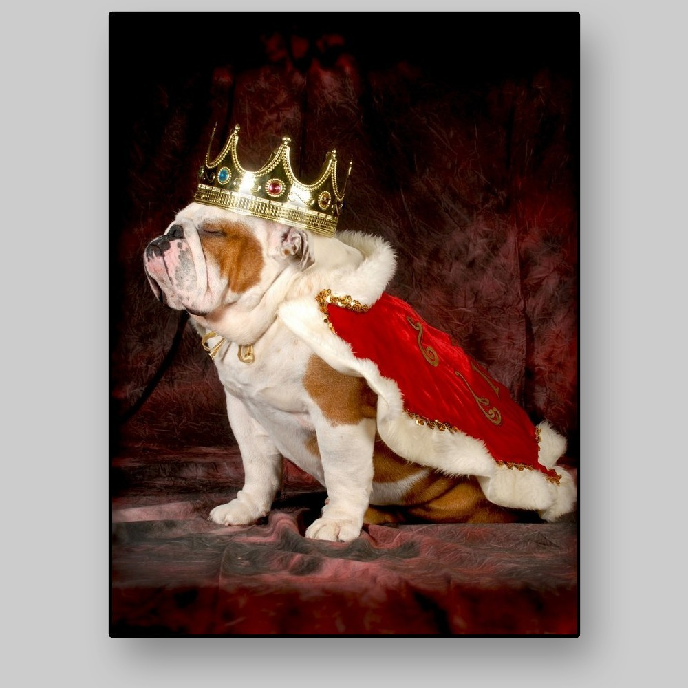 English Bulldog All4prints