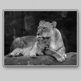 Lioness with her puppy, Masai Mara National Park, Kenya