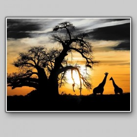 African savannah with baobab and giraffes