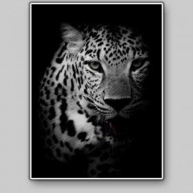 Portrait of a leopard, Kruger National Park, South Africa