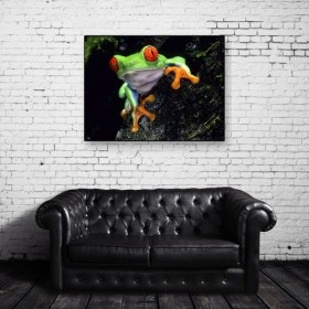 Red-eyed green frog