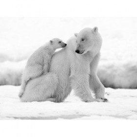 Polar bear with its calf