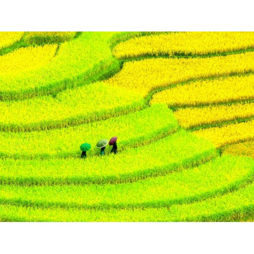 Cultivated meadows, China
