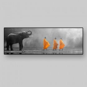 Young elephant with Monk alms round