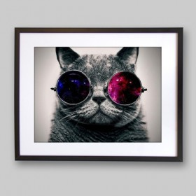 Cat with 3D glasses