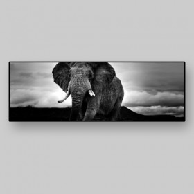Panoramic view of an elephant in the Ngorongoro Nature Park, Tanzania